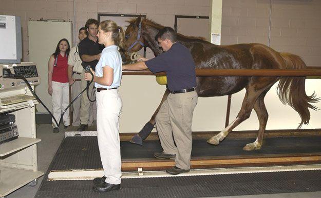 35 Best Equine Treadmills Dry Amp Wet Images On Pinterest