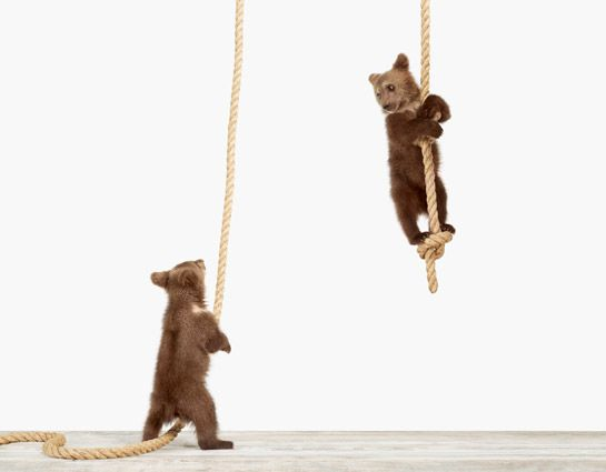 Climbing Bear Cubs by Sharon Montrose. Perfect for the playroom!
