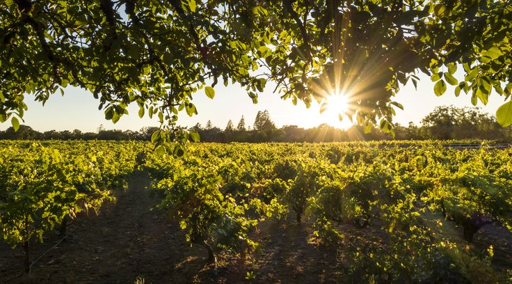 If you're headed to California Wine Country, don't skip the little city in the middle of it all.