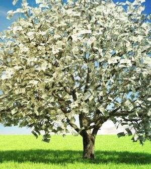 70 best images about Money Tree on Pinterest | Trees ...