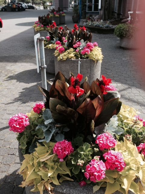 Beautiful flowers outside the Inn at the Quay Hotel, New Westminster, BC