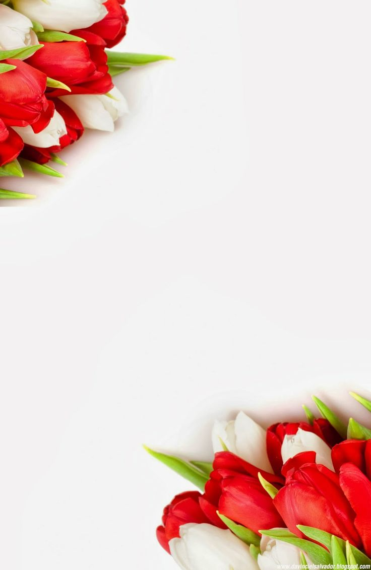 Red and White #Tulips #Invitation for your #Sweet15 and #Sweet16