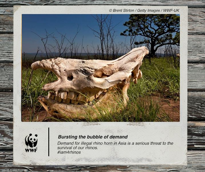 The Demand for illegal rhino horn in Asia is a serious threat to the survival of our rhinos. #iam4rhinos