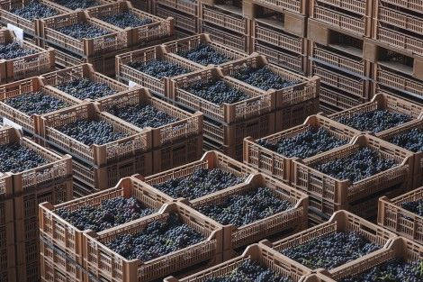 """2015 promises to be a memorable vintage.  Here you see the modern grape-drying facility called """"Terre di Fumane"""", where grapes are laid out to rest before being used to make Amarone and Recioto. #Amarone #Allegrini #Recioto #wine #grape #Valpolicella"""