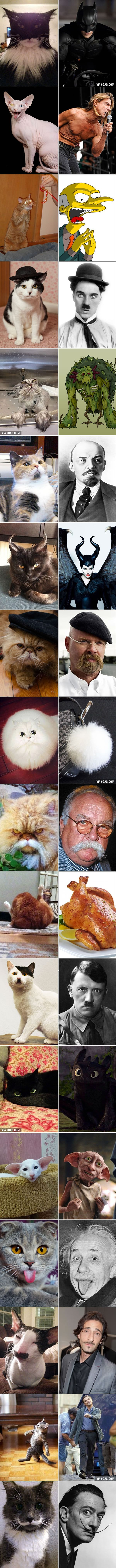 18 Cats That Look Like Something Else