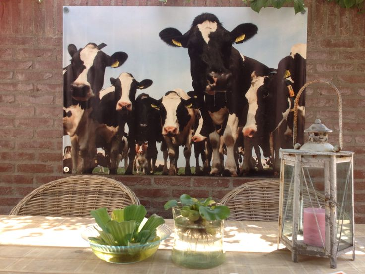 Met mooi uitzicht op de koeien