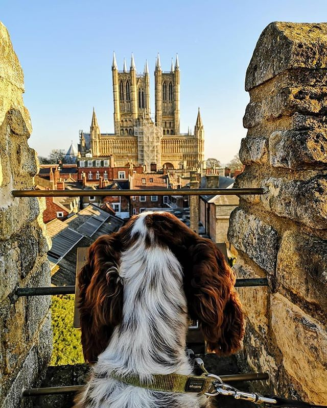 Great To See Lots Of Dogs Around Lincoln Today For Lincoln Castles Dog Friendly Weekend And After The Launch Of Visiting England Lincoln Cathedral Lincoln City