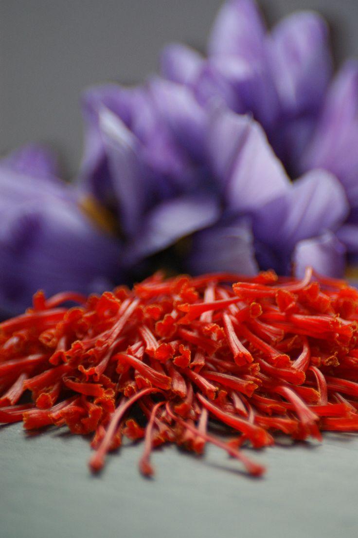 Safran de Provence - L'or rouge des 3 rivières Pistils de crocus sativus frais avant séchage.