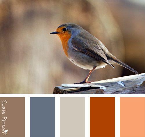 palette couleur rossignol