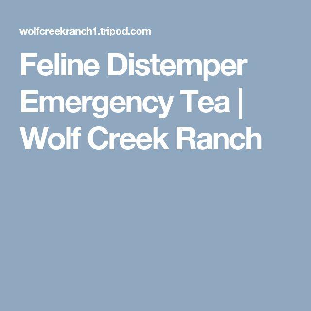 Feline Distemper Emergency Tea | Wolf Creek Ranch
