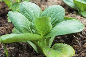 Les meilleurs légumes à cultiver à l'ombre