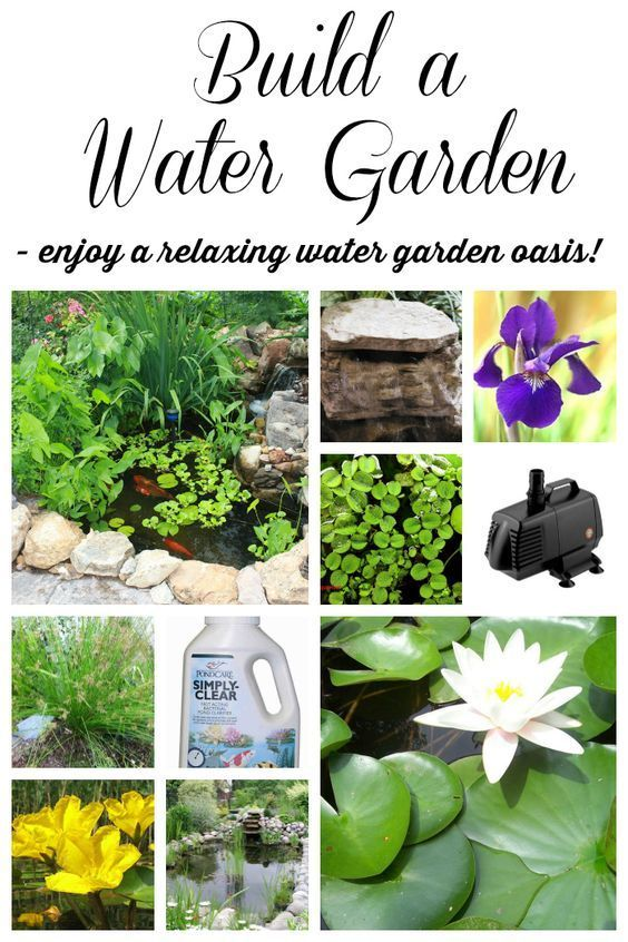 The perfect pond 10 tips on how to build one beautiful for Garden pond advice