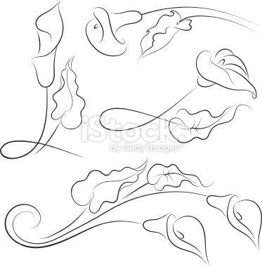 calla lily vector art free   Calla lily - Illustration