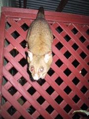 Cape Hillsborough - Wildlife