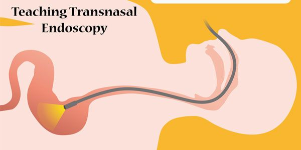 Teaching Transnasal Endoscopy to Graduate Students Without a Hospital or Simulation Laboratory: Pool Noodles and Cadavers | American Journal of Speech-Language Pathology | ASHA Publications