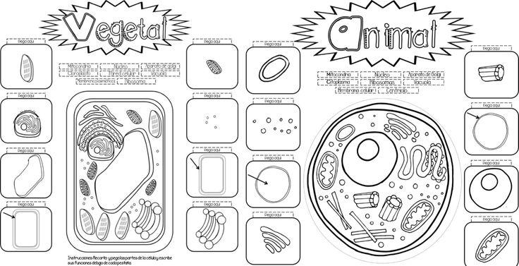 Interactivo para enseñar y aprender sobre la célula vegetal y animal - http://materialeducativo.org/interactivo-para-ensenar-y-aprender-sobre-la-celula-vegetal-y-animal/