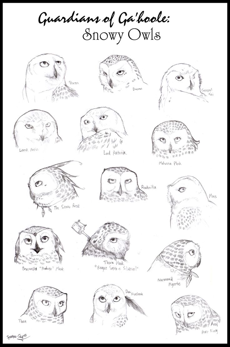 77 best owls of ga u0027hoole images on pinterest owls guardians of
