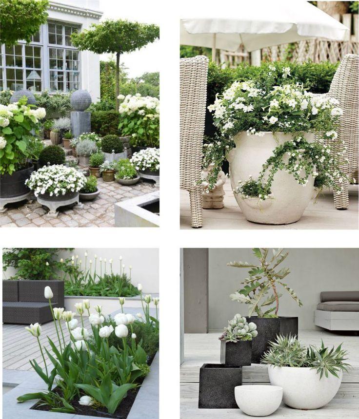 białe kwiaty na tarasie,balkon i taras z białymi i zielonymi roślinami,białe kwiaty w aranzacji ogrodów,białe inspiracje ogrodowe,białe tarasy i ogrody,betonowe donice,pomysł na biały ogród i taras