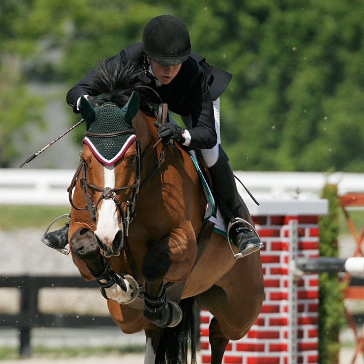 Images Of Jumping Horses Miscellaneous Background Horse