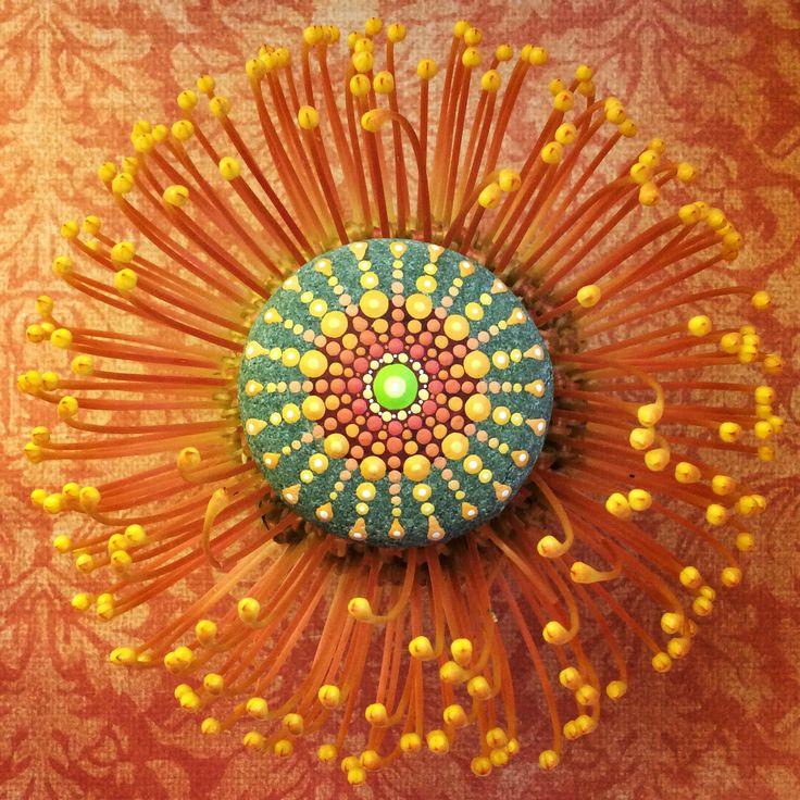 Mandala stone inspired by this protea, artist- Elspeth McLean #rockart #protea #elspethmclean