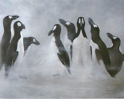 Great Auk -extinct /The effort to wipe the birds out was so systematic that the killing of the last known pair was documented in gruesome detail. On July 3rd, 1844, a hunter named Sigurður Ísleifsson had strangled the last two adults, while his partner Ketill Ketilsson smashed the egg the birds had been incubating with his boot.  Read more: http://www.mnn.com/earth-matters/animals/photos/13-animals-hunted-to-extinction/great-auk#ixzz3CsDn5SpW