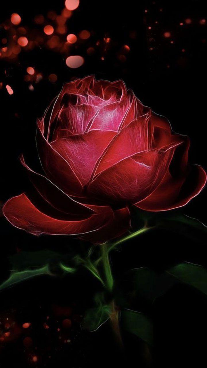 Red Rose Love Dark Red And Black Wallpaper Elegant Valentine
