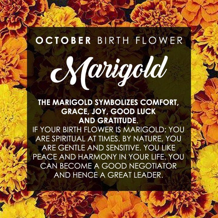 october birth month flower marigold comfort grace