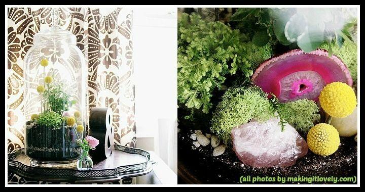 How to make a Terrarium Ornamental Plants
