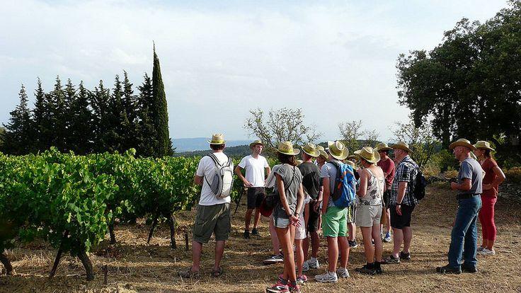 Balade vigneronne Domaine Fontanille Haut  Laure Minervois | par Office de Tourisme Haut Minervois de Carcassonne A