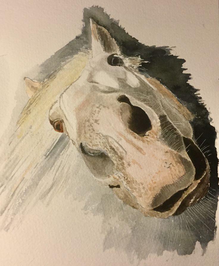 Doh....'Ello.....'ave you got a tit-bit for me please?.... #art #watercolour #horse