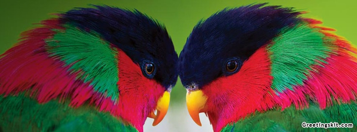 Two Collared Lories Facebook Cover: Collars Loris, Homepag Backgrounds, Image Archives, Bing Image, Bing Desktop, Desktop Backgrounds, Beautiful Loris, Beautiful Birds, Backgrounds Image