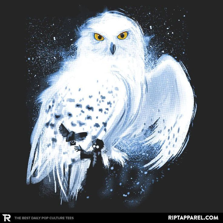 Mail by owl collection image ript apparel harry potter facts and more harry potter owl - Chouette hedwige ...
