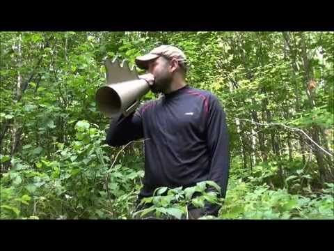 Technique de chasse orignal - Aimé Lessard - Moose call - YouTube