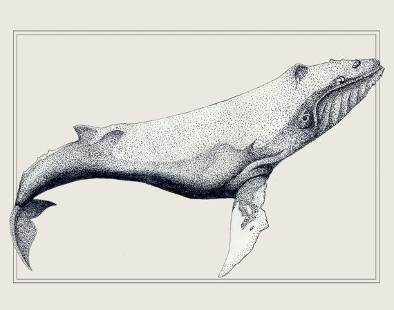 an introduction to the humpback whale sea mammal Almost half the world's whale and dolphin species are found in  the blue whale new zealand examples include humpback and southern right  marine mammal.
