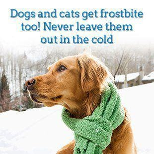 http://keepmefromharm.com  Keep your pets out of the cold! #pets #petsafety #dogs #coldweathersafetyfor pets