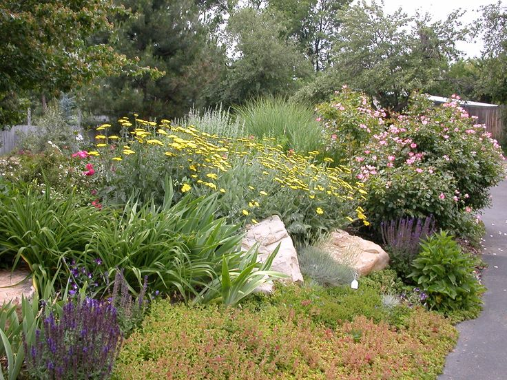 40 best Drought tolerant landscaping images on Pinterest Drought