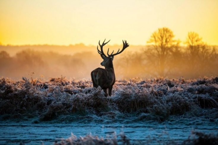 winter herten - Google Search