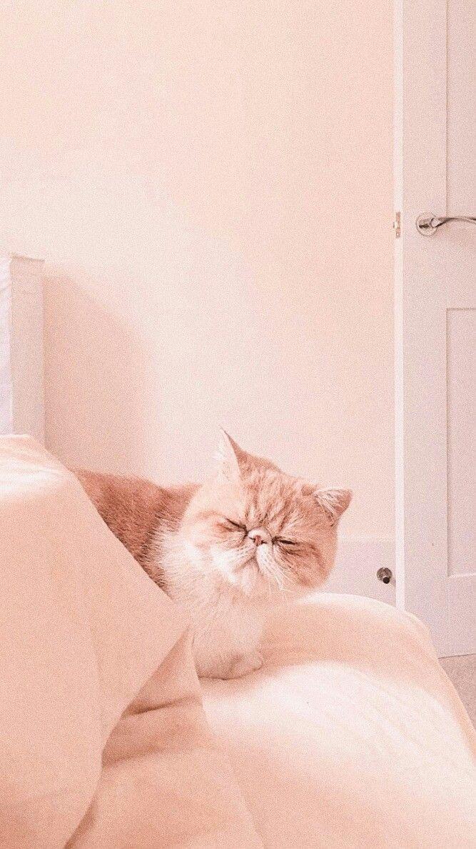 Pin By Revenge On Lockscreen Cat Wallpaper Cat Aesthetic Cute Cat Wallpaper