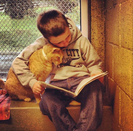 Children Read To Shelter Cats To Soothe Them by lovemeow: At Animal Rescue League of Berks County, children can read to shelter cats to soothe them. 'The program will help children improve their reading skills while also helping the shelter animals. Cats find the rhythmic sound of a voice very comforting and soothing.' #Cats #Kids #Reading