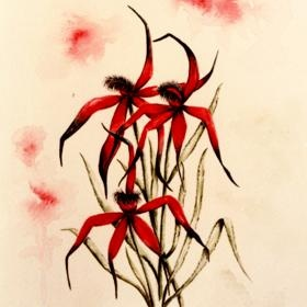 Blood Red Spider Orchid by Judy LaMonde. Copyright available. see more on her gallery www.artinvesta.com/artist/32