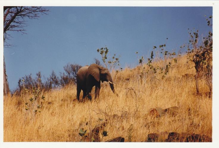 Serengeti Nat'l Park