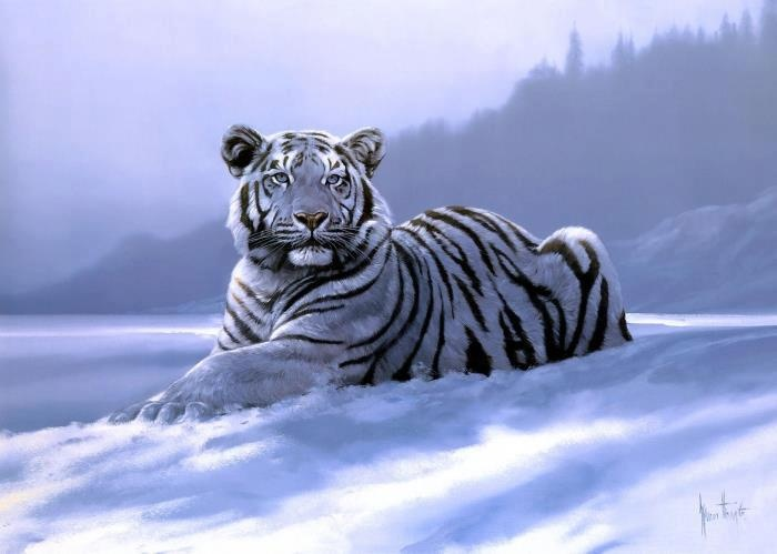 Sneeuw tijgers , mooiste beesten op aarde. ♡
