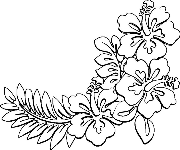 Hawaiian Flower Coloring Page Hibiscus Rosa Sinensis