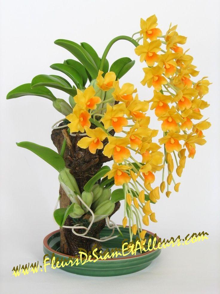 Dendrobium Aggregatum Orchids