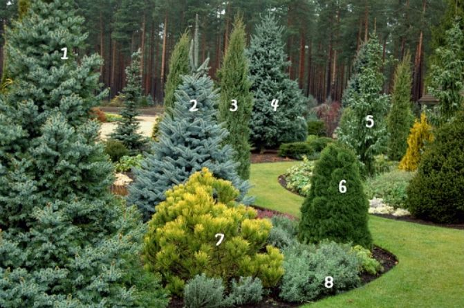 Ornamental Landscaping Bushes : Best images about taming a slope on