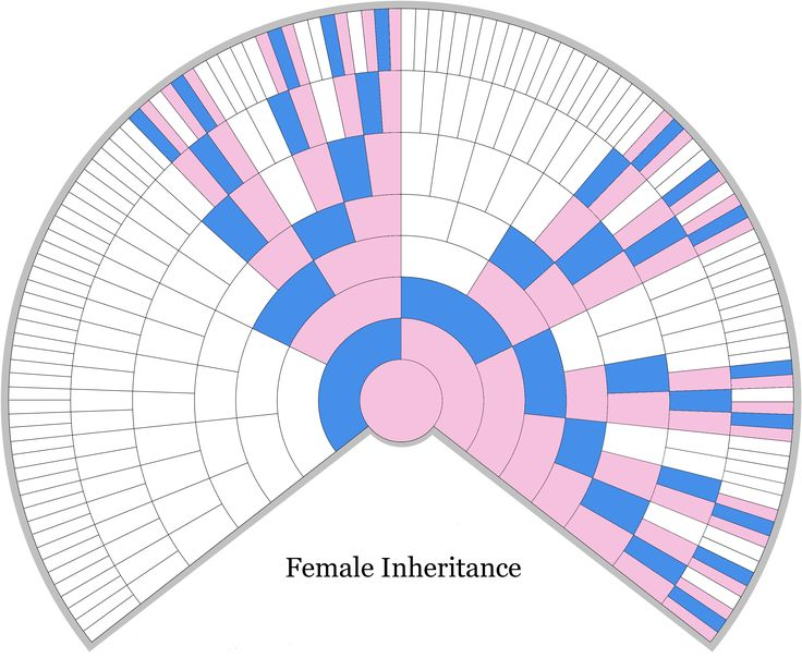 Female X-DNA Inheritance Chart - Unlocking the Genealogical Secrets of the X Chromosome