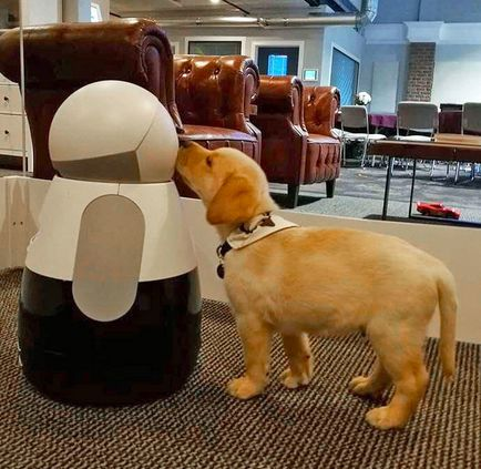 Introduce Your Household Pet To Your Household Robot...see more at PetsLady.com -The FUN site for Animal Lovers