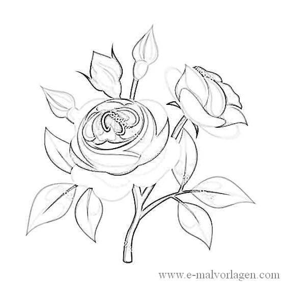 ausmalbild rosen 13  ausmalen ausmalbilder malvorlagen