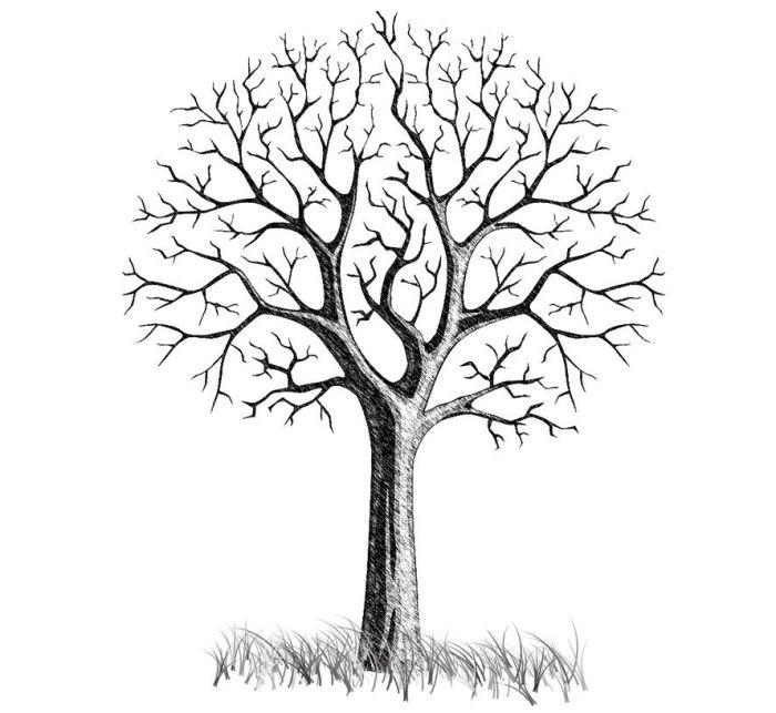 Dessin Arbre Avec Branches