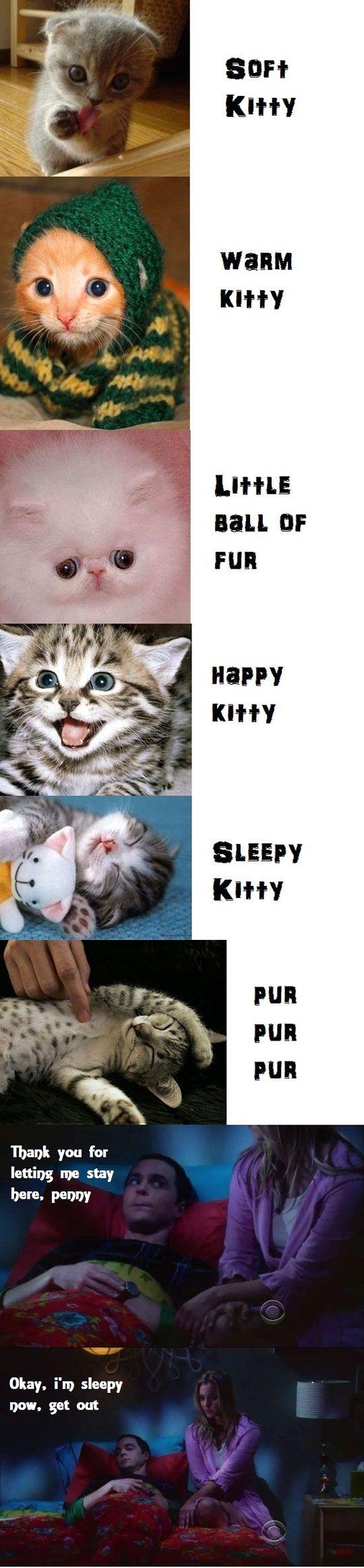 love big bang theory: Soft Kitty, Warm Kitty, Cat, Bigbangtheori, Big Bang Theory, Big Bangs Theory, Funny, Kittens, Kitty Songs